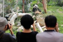澳門大熊貓館及珍稀動物館